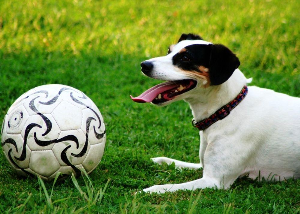 Ντριπλαδόρος σκύλος… (video)