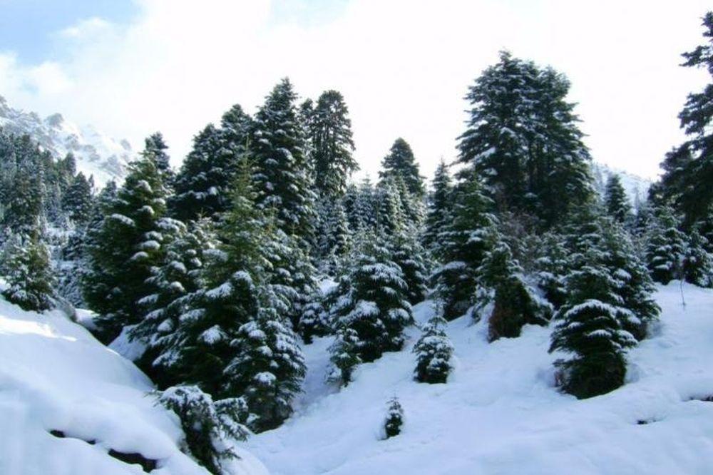 Χριστουγεννιάτικα δέντρα τέλος…