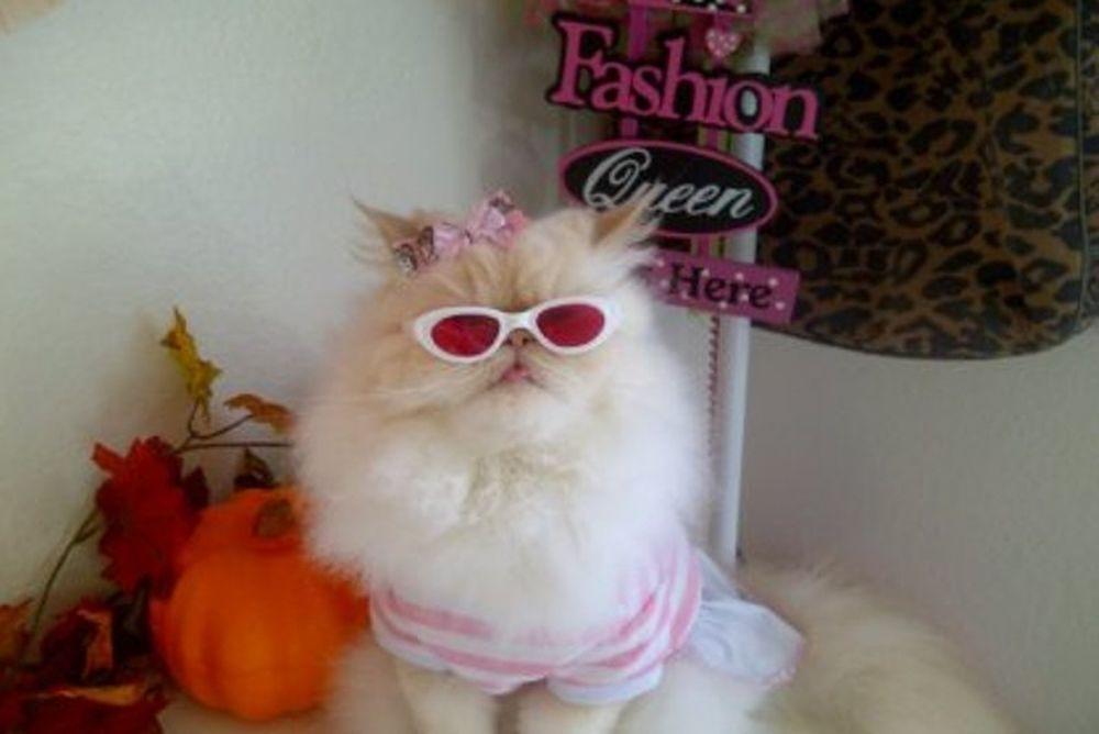 Η πρώτη γάτα «fashion blogger» (photos)