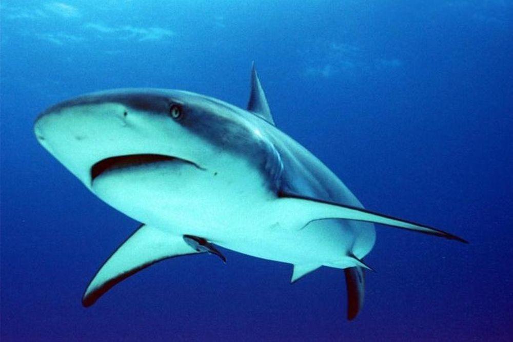Με… συμμετοχή καρχαρία το Παγκόσμιο Πρωτάθλημα