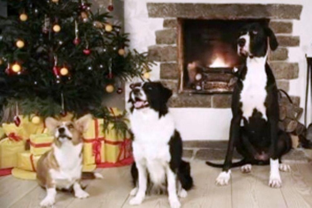 Σκυλίσια… κάλαντα