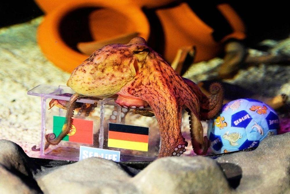 Euro 2012: «Βλέπει» Γερμανία ο Πάουλο (photos)