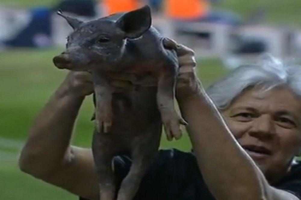 Πήρε το... γουρούνι του στο γήπεδο! (video)