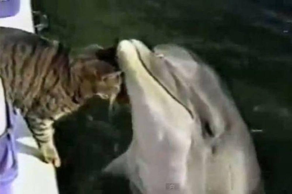 Βίντεο: Aπίστευτο παιχνίδι γάτας με δελφίνι