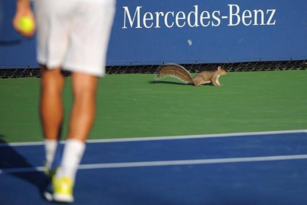 Σκίουρος τενίστας στο US Open! (video)