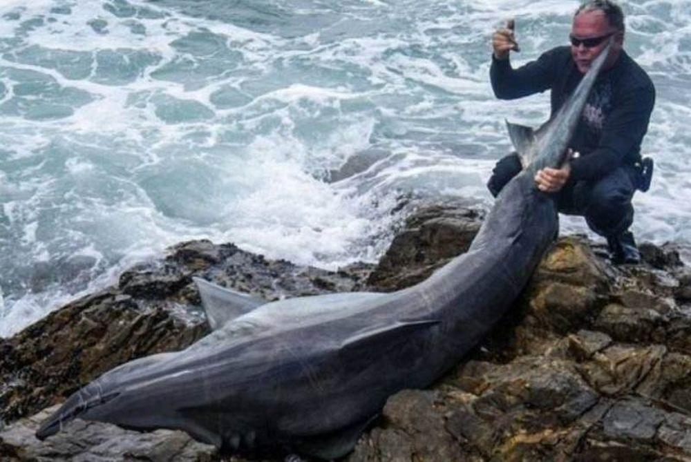 Ψαράς καταδικάστηκε για το φόνο ενός λευκού καρχαρία
