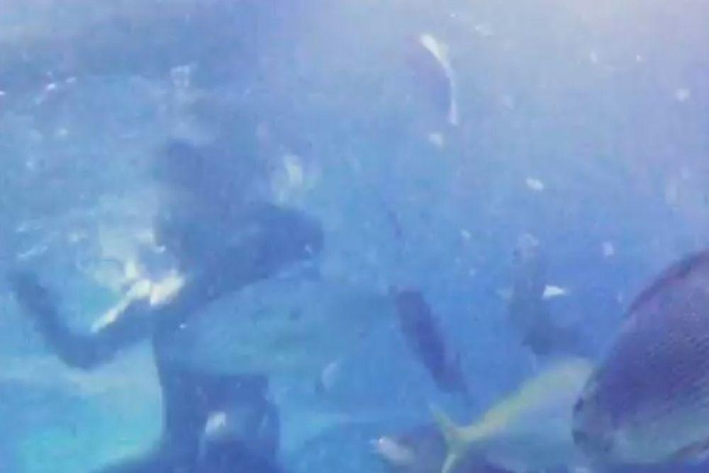 Μερσέντες: Κολυμπά σε ενυδρείο ο Ρόζμπεργκ (video)