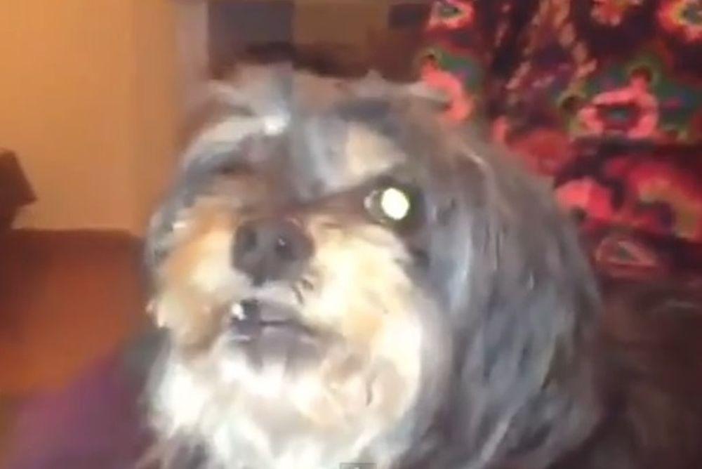 Ρεάλ Μαδρίτης: Σκύλος «δαιμονίζεται» για την Μπαρτσελόνα! (video)