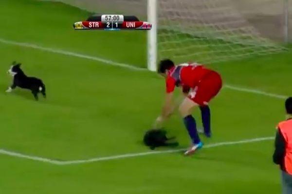 Βολιβία: Ballboy έσωσε κουτάβι από ποδοσφαιριστή (video)