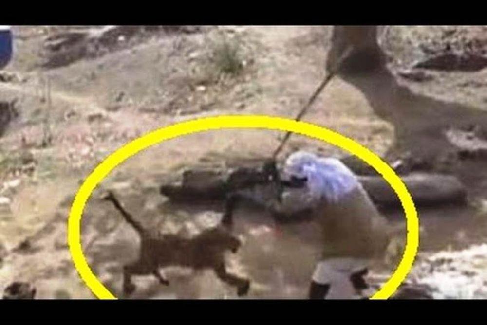 Συγκλονιστικό βίντεο: Η άνιση μάχη ενός Ινδού με μία… λεοπάρδαλη! (video)