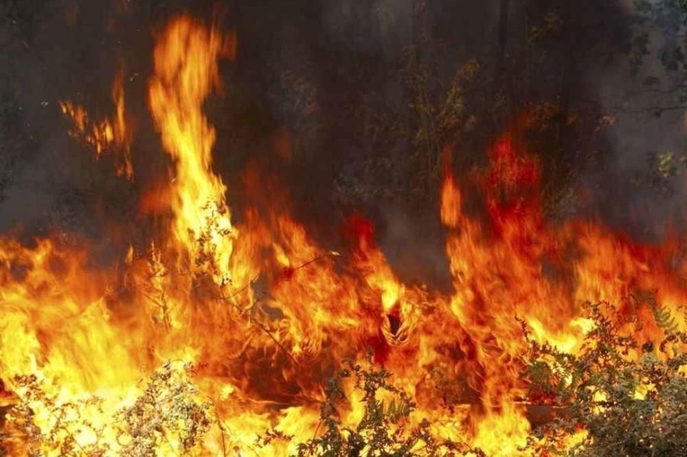 Δραματικές ώρες: Στις φλόγες ο Καρέας και η Λακωνία
