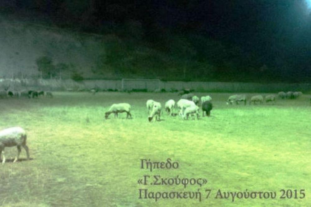 Πρόβατα βοσκούν σε γήπεδο της Super League!!!