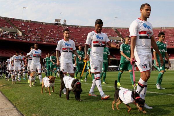 Με σκυλιά αντί για παιδιά η Σάο Πάολο! (photos+video)