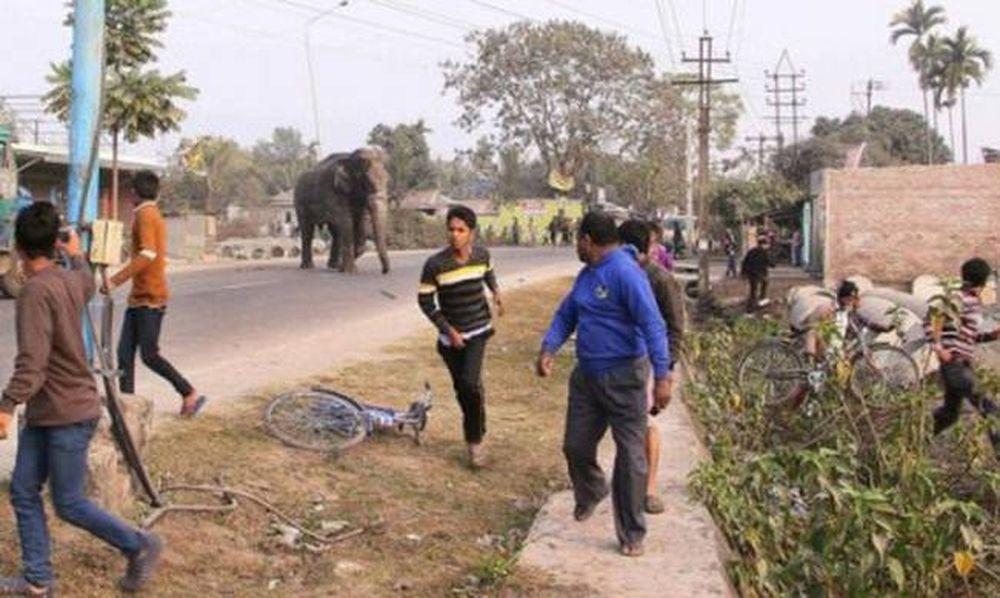 «Τραμπούκος» ελέφαντας σπέρνει τον πανικό και ισοπεδώνει 100 σπίτια σε χωριό της Ινδίας (photos)