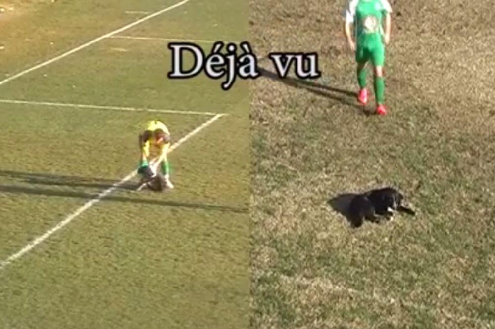 ΑΠΙΣΤΕΥΤΟ: Deja vu με σκύλο στις Σέρρες!