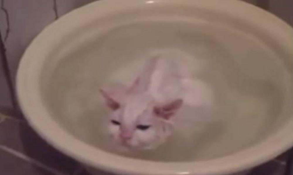 Δε θα πιστεύετε στα μάτια σας! Η γάτα δε θέλει να τη βγάλουν από το μπάνιο της! (video)