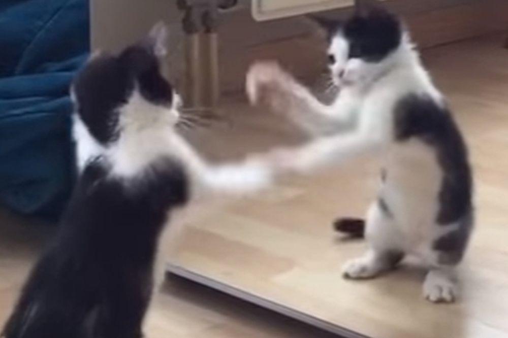 Γατάκι βλέπει τον εαυτό του για πρώτη φορά στον καθρέφτη και παθαίνει... αμόκ (video)