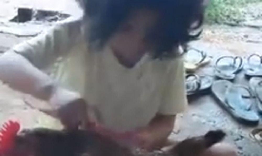Ένα κοριτσάκι χτενίζει την... κότα της κι εκείνη κάθεται σαν μωρό (video)