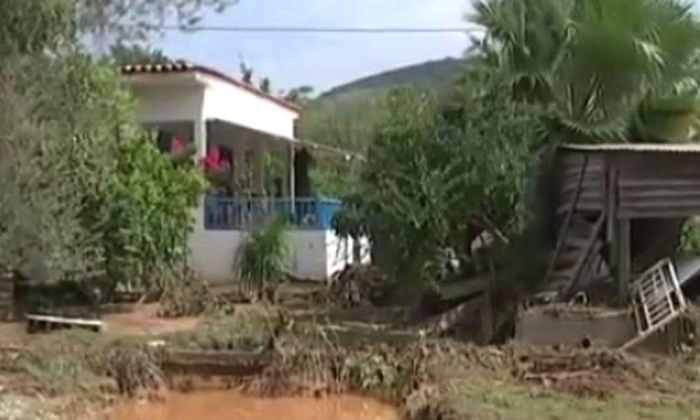 Συγκινητική πίστη: Ο «Χάτσικο» της Λακωνίας δεν άφηνε τους διασώστες να πάρουν το νεκρό αφεντικό του