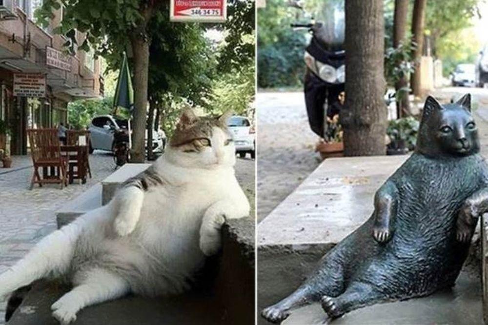 Viral: Η πιο διάσημη γάτα της Κωνσταντινούπολης τιμήθηκε με το δικό της άγαλμα (Pics)