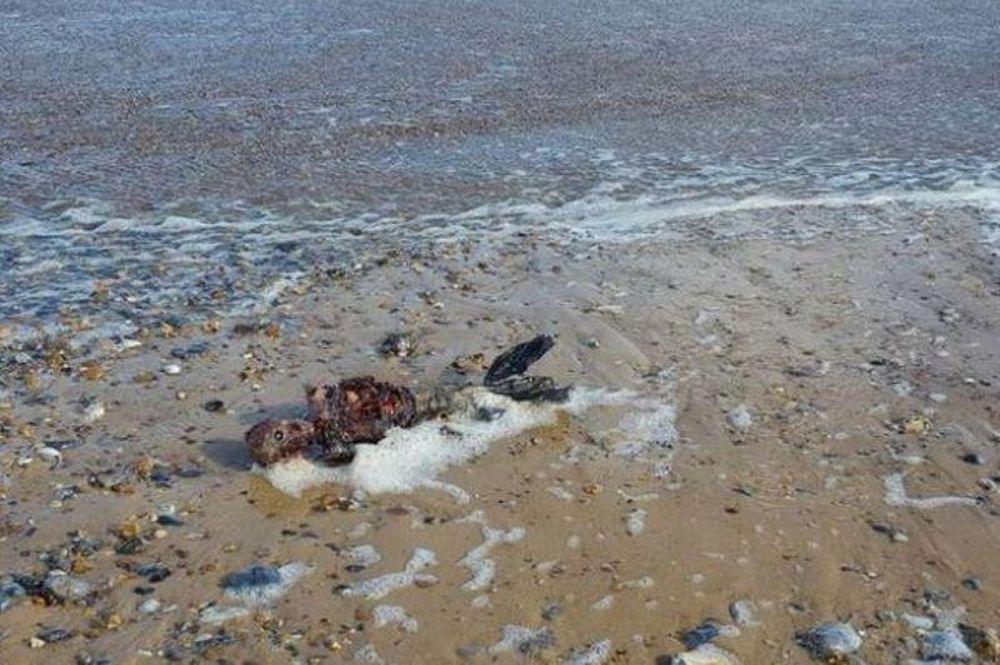 Γοργόνα σε αποσύνθεση ξεβράστηκε σε παραλία της Βρετανίας (σκληρές εικόνες & video)