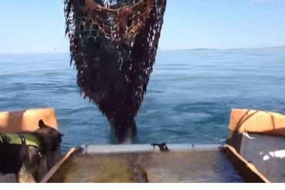 Τραγικό ψάρεμα: Τράτα σαρώνει το βυθό για... καρχαριάκια (video)