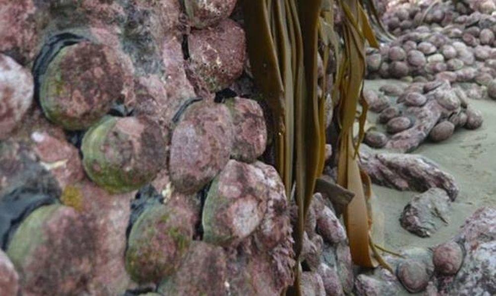 Συγκλονιστικές φωτογραφίες από τη Νέα Ζηλανδία: Ο σεισμός «σήκωσε» τον πυθμένα δύο μέτρα