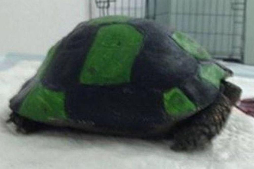 Ασυνείδητοι μετέτρεψαν χελώνα σε μπάλα ποδοσφαίρου (pics)