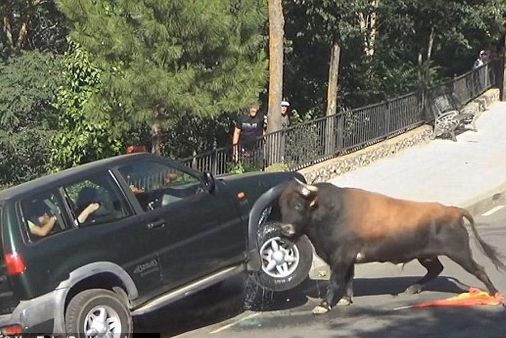 Ταύρος - αυτοκίνητο 1-0 (video)