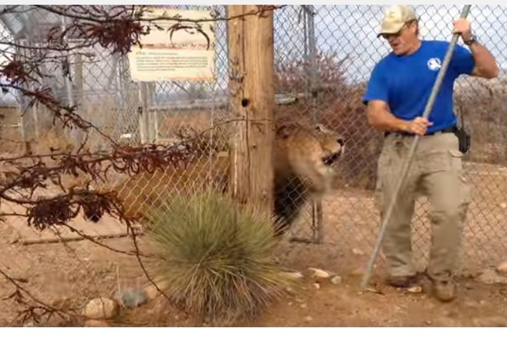 Ποτέ μη γυρνάς την πλάτη σου σε λιοντάρι (video)