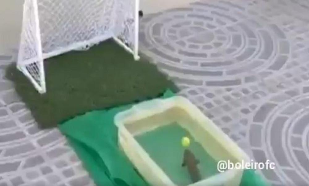 Απίστευτο: Στη Βραζιλία σκοράρουν και τα… ψάρια!
