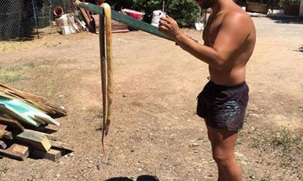 Αντιμέτωπος με ένα μεγάλο φίδι: Ποιος λαϊκός τραγουδιστής είναι ο αληθινός «Survivor» (photo)