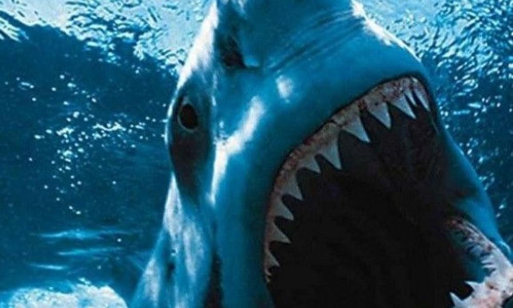 Αυτά παθαίνεις όταν... ψαρεύεις καρχαρία με το καλάμι (video)