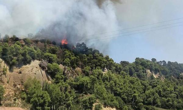 Φωτιά: Μεγάλη πυρκαγιά στην Αμαλιάδα - Εκκενώνεται χωριό
