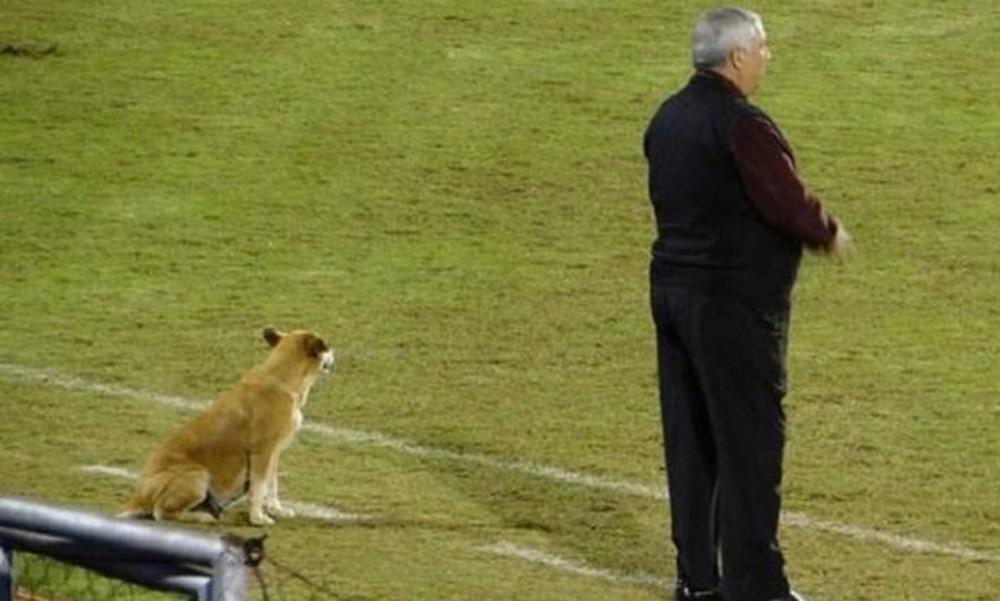 Ο καλύτερος βοηθός του προπονητή είναι ο… σκύλος του! (photos)