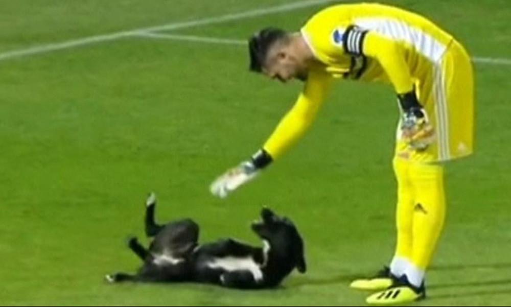 Σκύλος εισβάλει και… παίζει με τον τερματοφύλακα! (video)