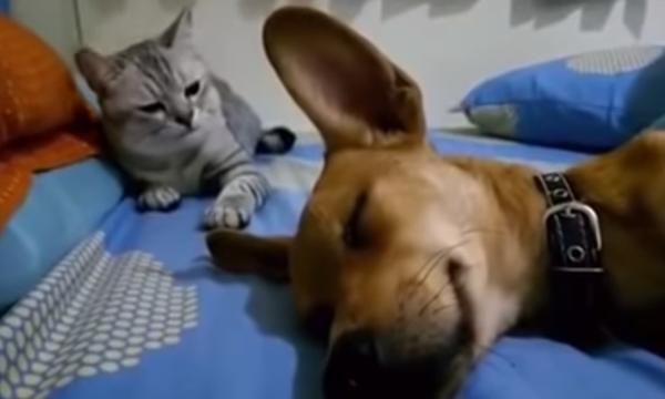 Σκύλος «αέριζεται» στο πρόσωπο της γάτας και η αντίδρασή της είναι επική (pics+vid)