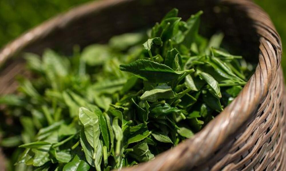 Αυτοί είναι οι λόγοι που το πράσινο τσάι πρέπει να μπει ASAP στη ζωή σου