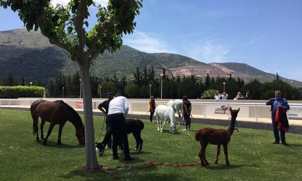 Ξεχωριστή Κυριακή στο Markopoulo Park με μεγάλα κέρδη